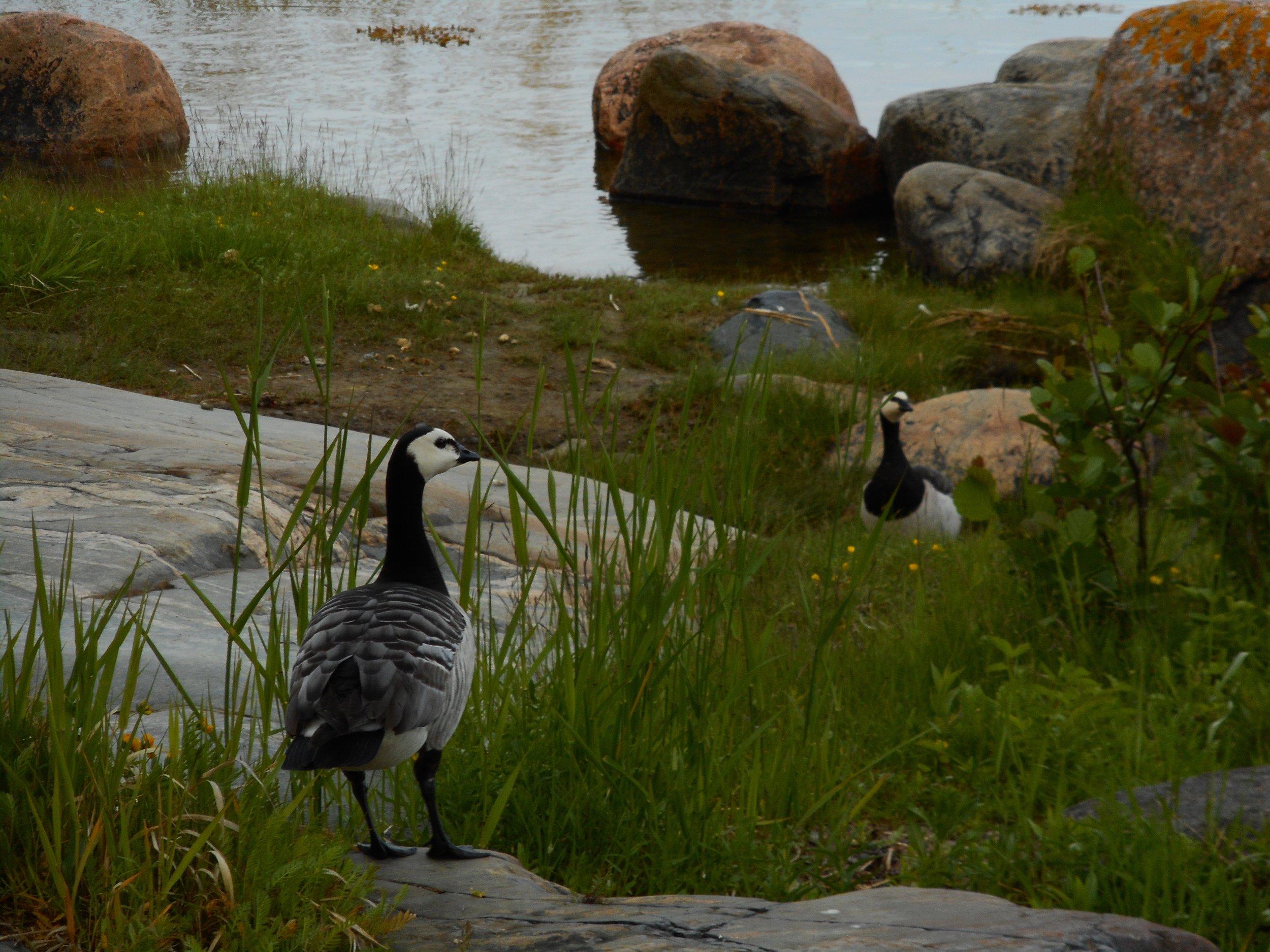 Migrating Birds nature trip Helsinki
