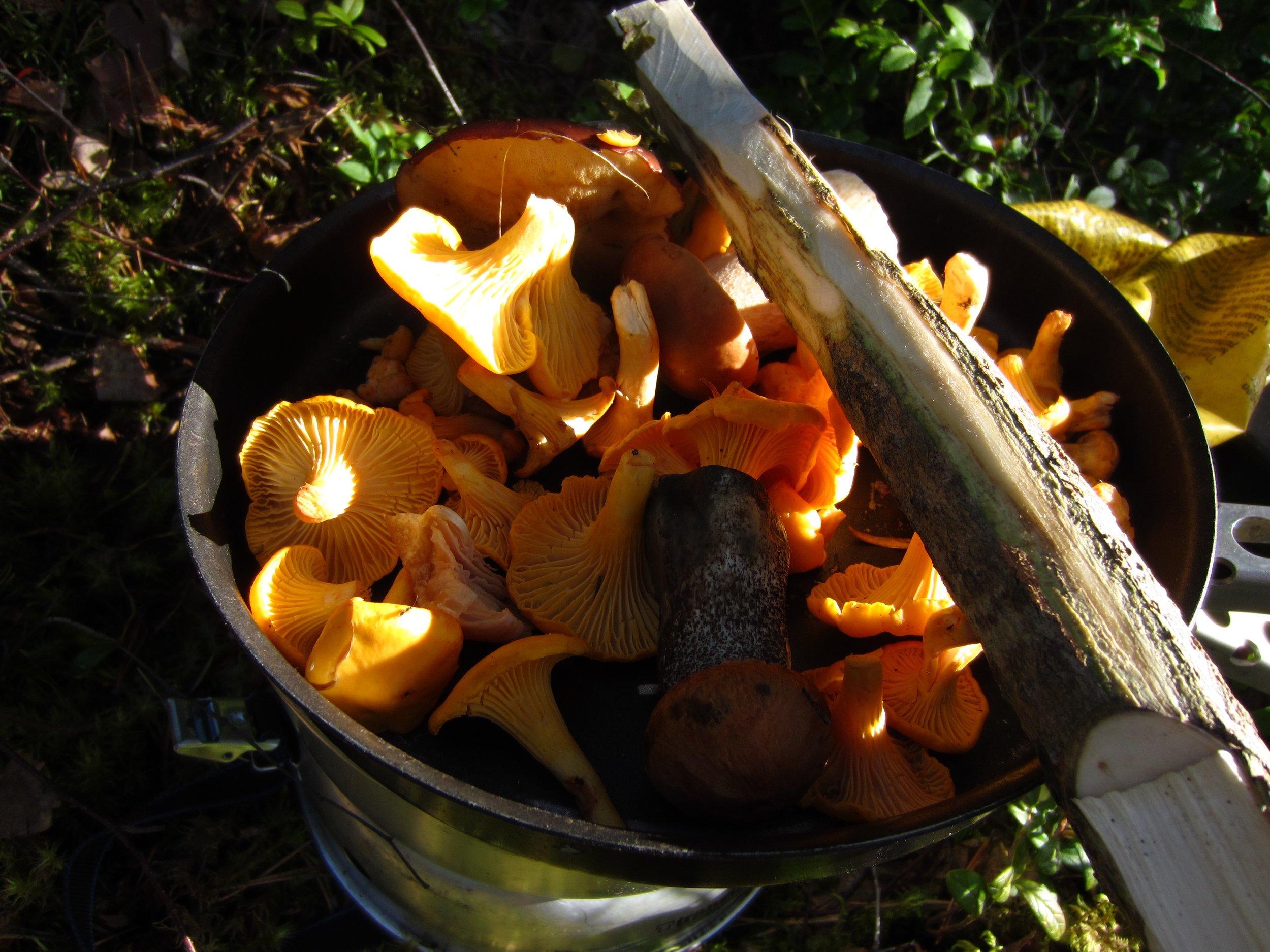 Chantarelle Mushroom picking trip in Nuuksio National Park