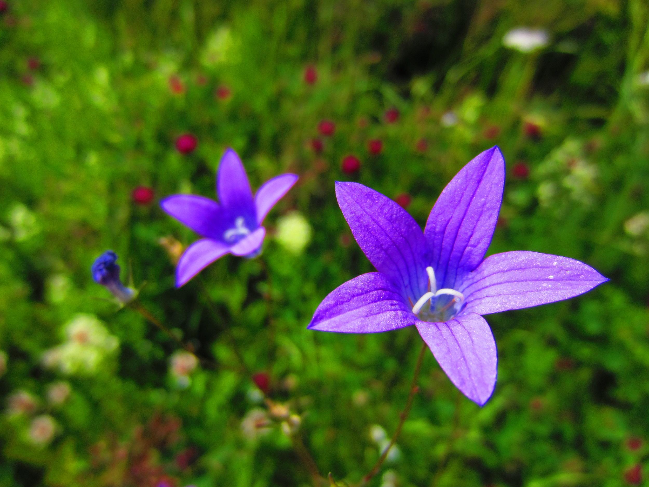 Wild Flowers Nuuksio National Park