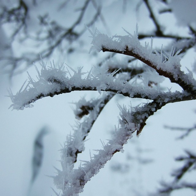 Sharp snow spikes made by winter #minus30degrees #snowspikes #lomitravels #lominaturetravels  #visitfinland #finnishwinter #beautyofnature #winter #winternature #snowformations #visithelsinki  #myhelsinki #explorefinland #finland #helsinki