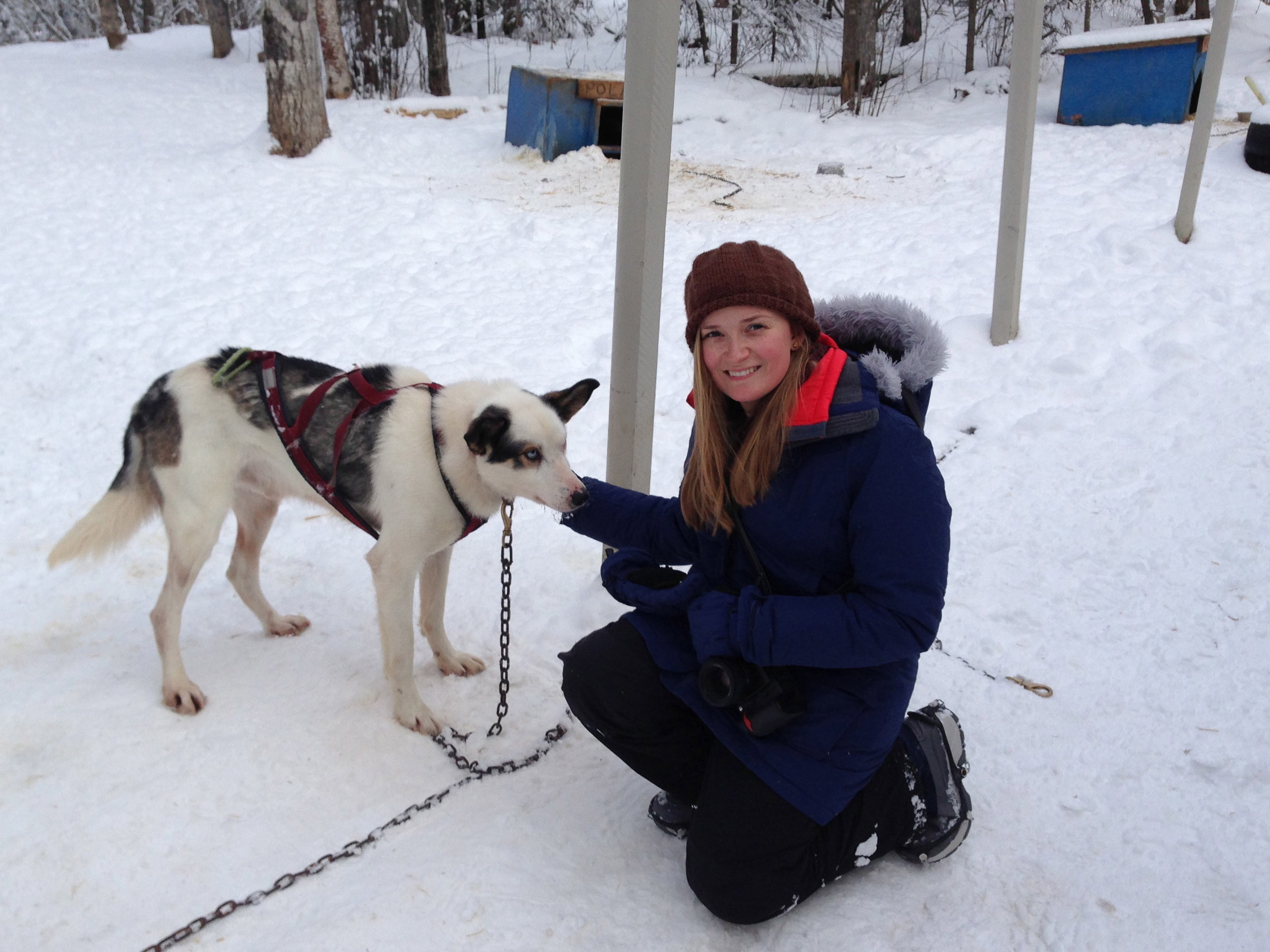 IMG_3803 Anchorage Alaska Dog Photography.jpg
