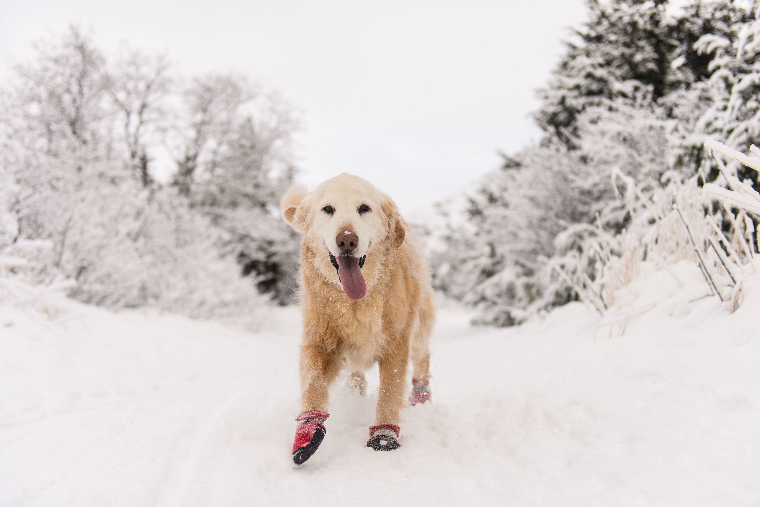 Meredith Berg Anchorage Alaska Dog Photography Shelby Giese-63.jpg