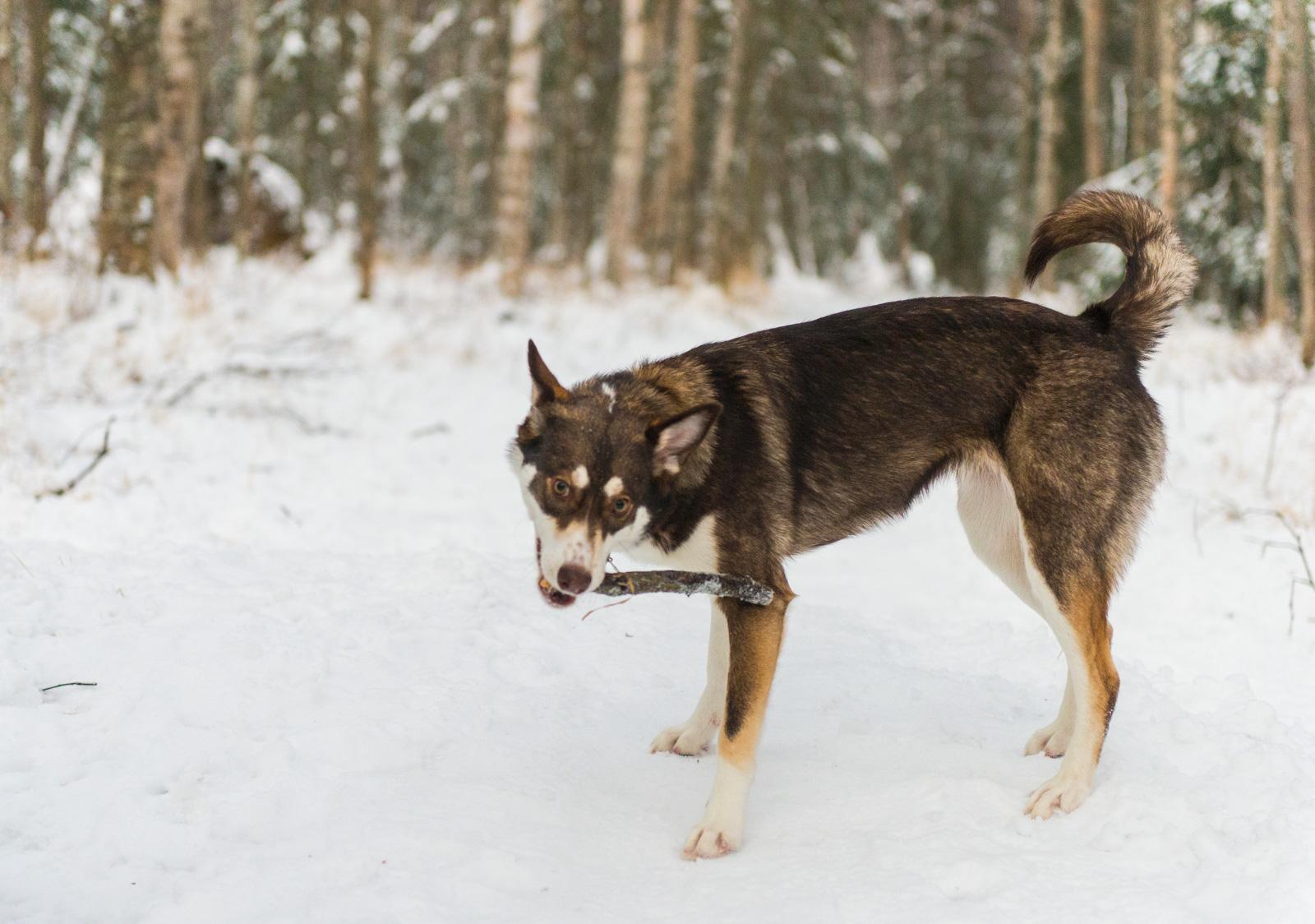 Meredith Berg Photography Anchorage Alaska Dog Pet Photographer Cedar Chaudhary-60.jpg