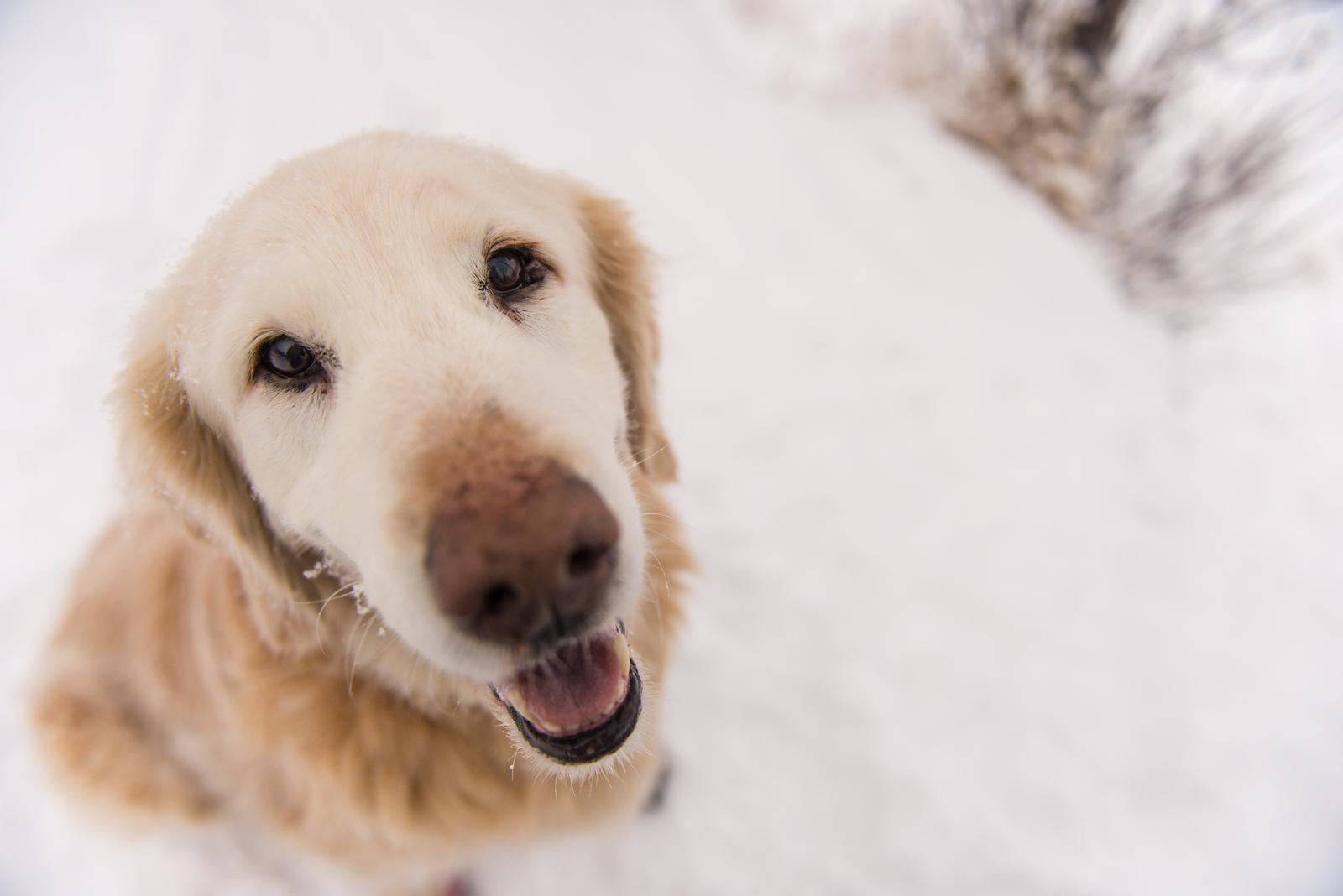 Meredith Berg Photography Anchorage Alaska Dog Pet Photographer Shelby Giese-48.jpg