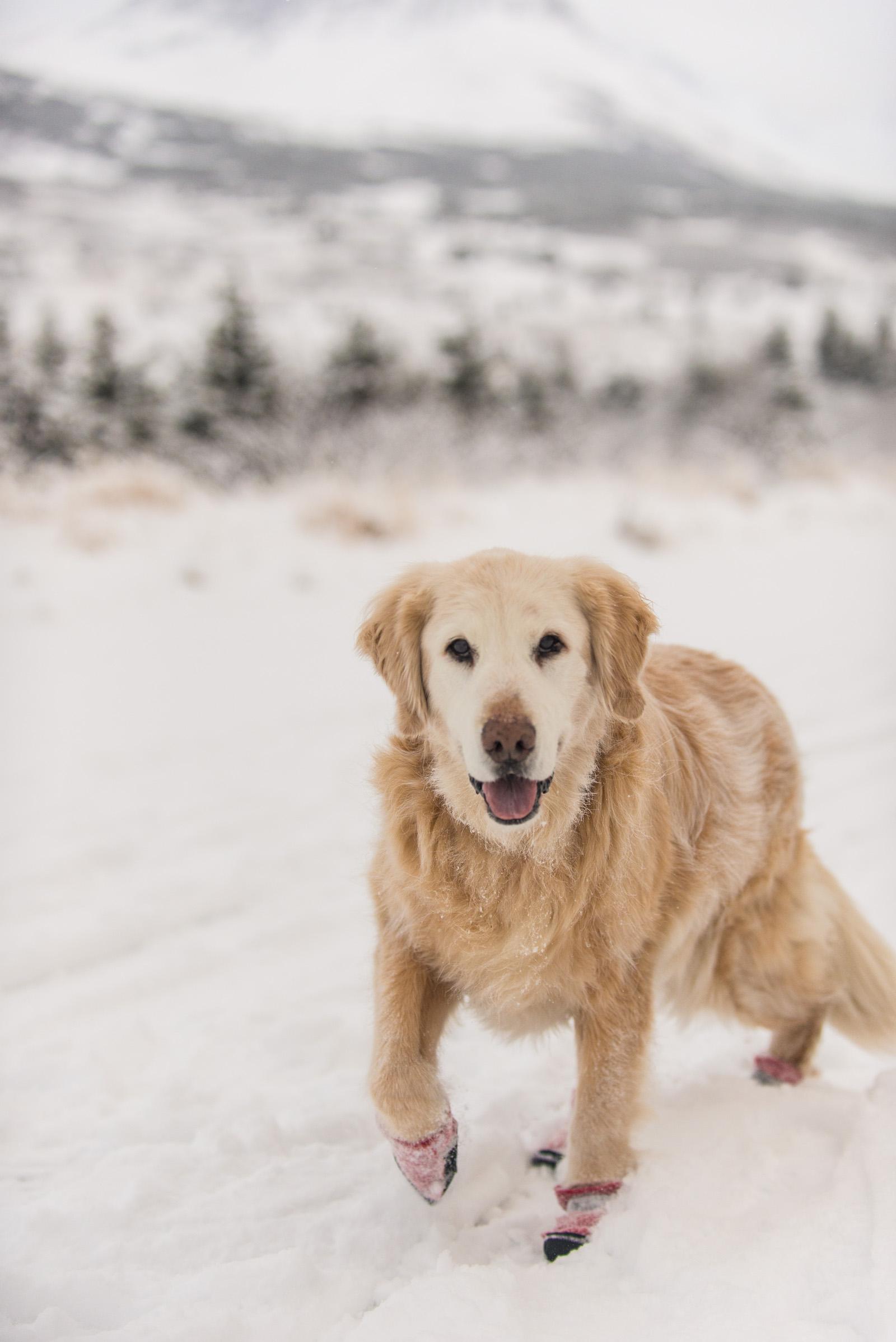 Meredith Berg Photography Anchorage Alaska Dog Pet Photographer Shelby Giese-183.jpg