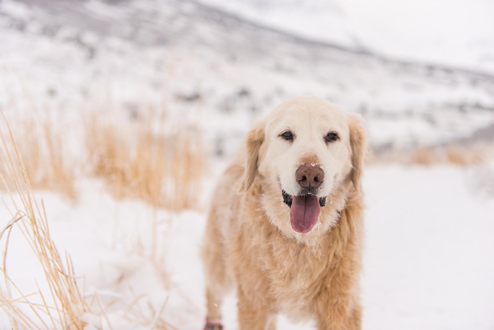 Meredith Berg Photography Anchorage Alaska Dog Pet Photographer Shelby Giese-270.jpg