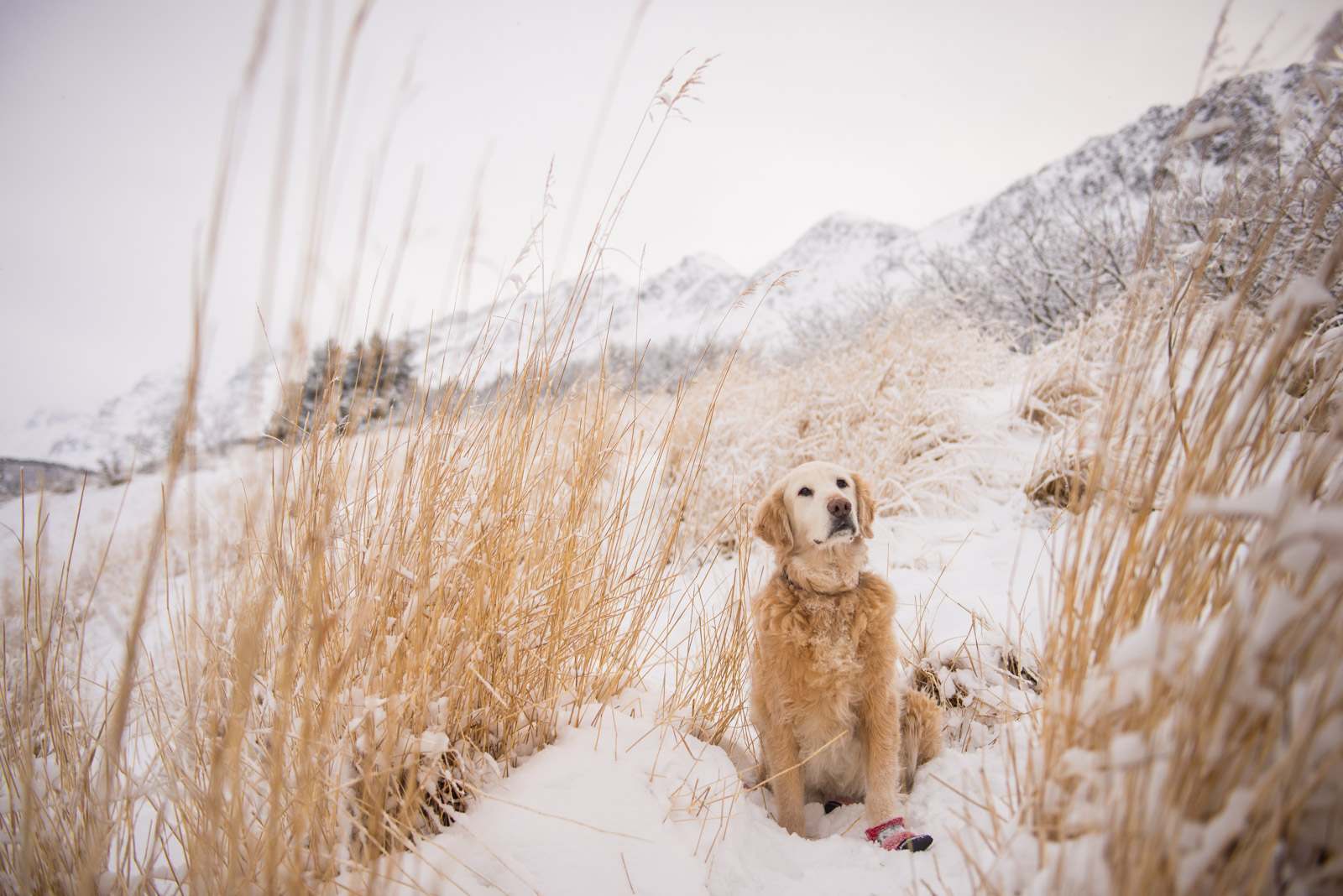 Meredith Berg Photography Anchorage Alaska Dog Pet Photographer Shelby Giese-293.jpg