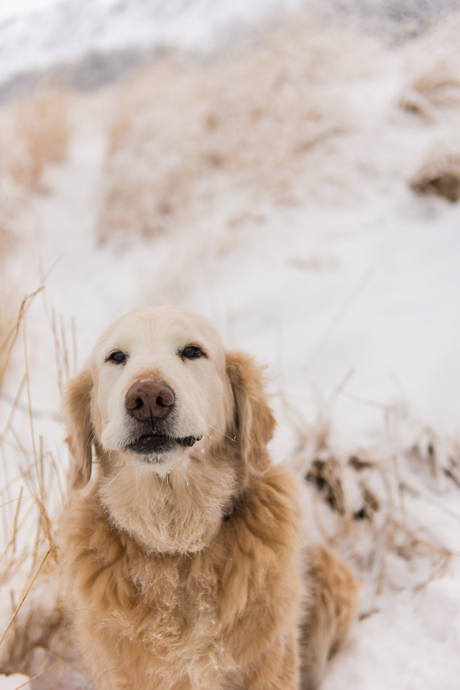 Meredith Berg Photography Anchorage Alaska Dog Pet Photographer Shelby Giese-296.jpg