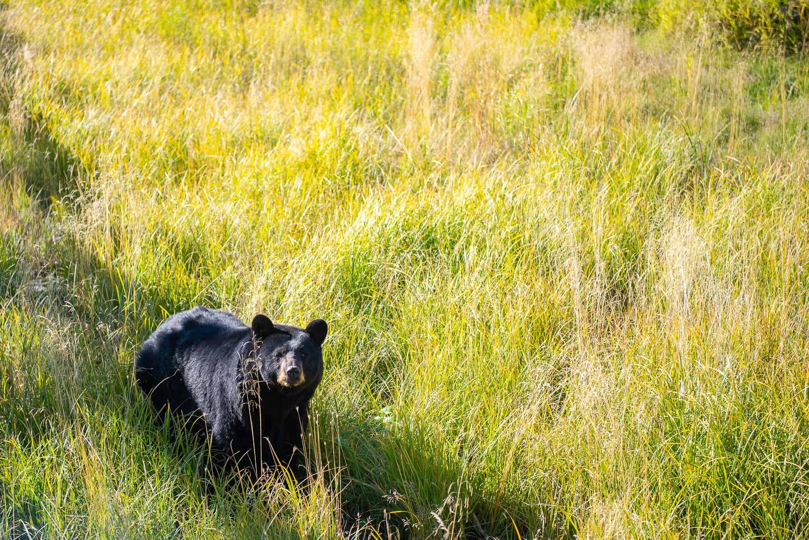 Meredith Berg Photography Anchorage Alaska Dog Pet Photographer AWCC Veggie Feed-7130.jpg