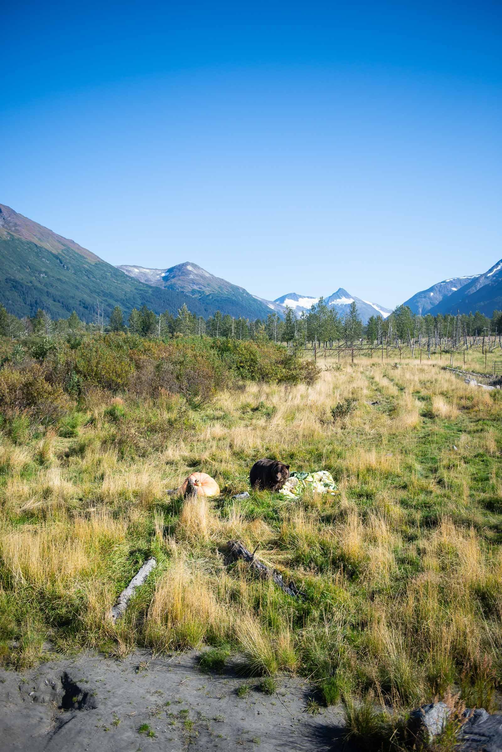 Meredith Berg Photography Anchorage Alaska Dog Pet Photographer AWCC Veggie Feed-7141.jpg