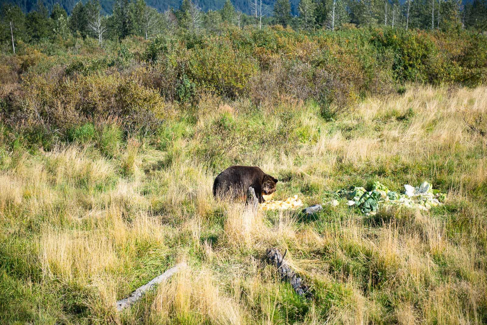 Meredith Berg Photography Anchorage Alaska Dog Pet Photographer AWCC Veggie Feed-7184.jpg
