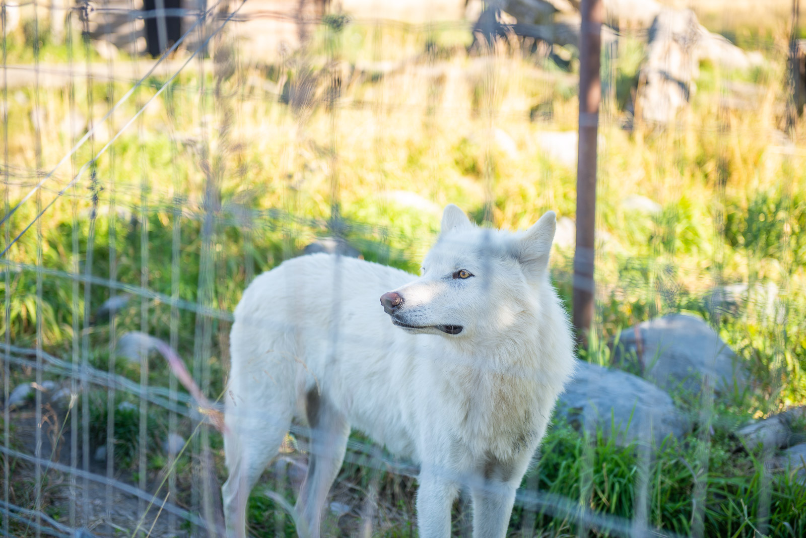 Meredith Berg Photography Anchorage Alaska Dog Pet Photographer AWCC Veggie Feed-7278.jpg
