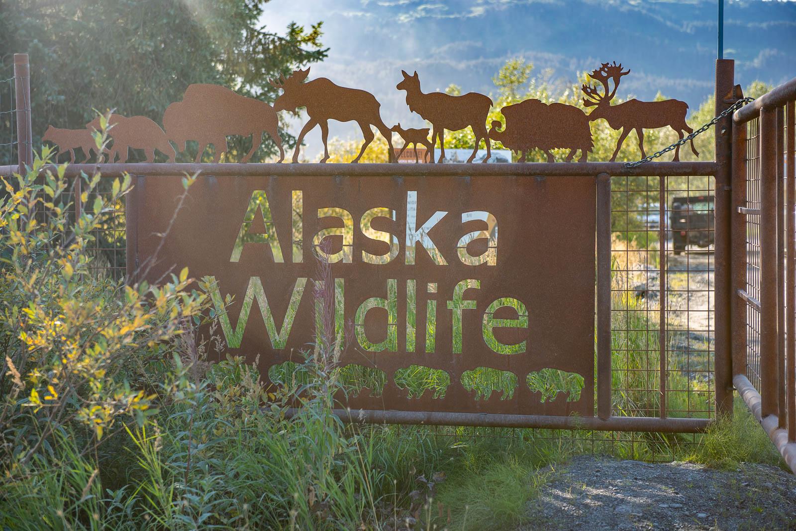 Meredith Berg Photography Anchorage Alaska Dog Pet Photographer AWCC Veggie Feed-7283.jpg