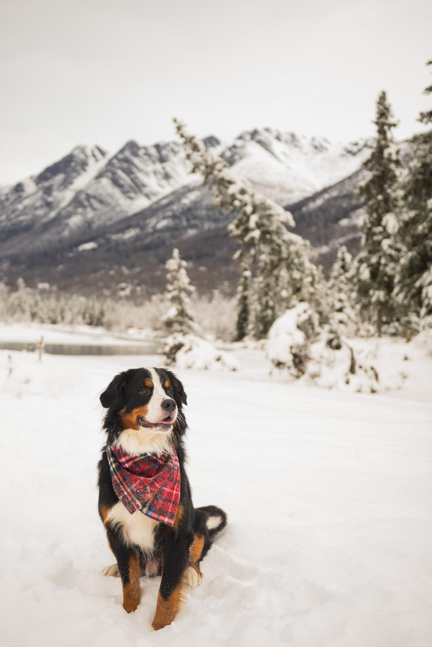 Meredith Berg Photography Anchorage Alaska Dog Pet Photographer Yukon Gethan-107-Edit.jpg