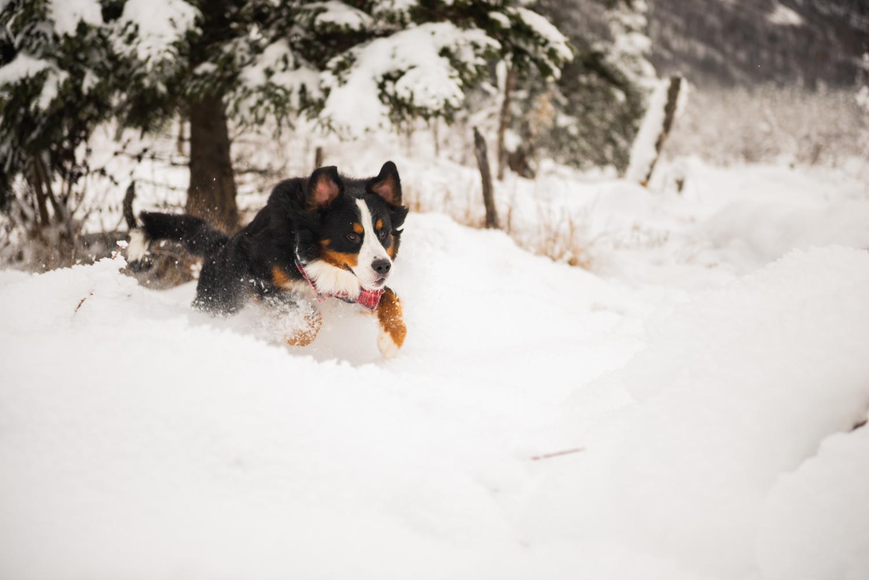 Meredith Berg Photography Anchorage Alaska Dog Pet Photographer Yukon Gethan-179.jpg