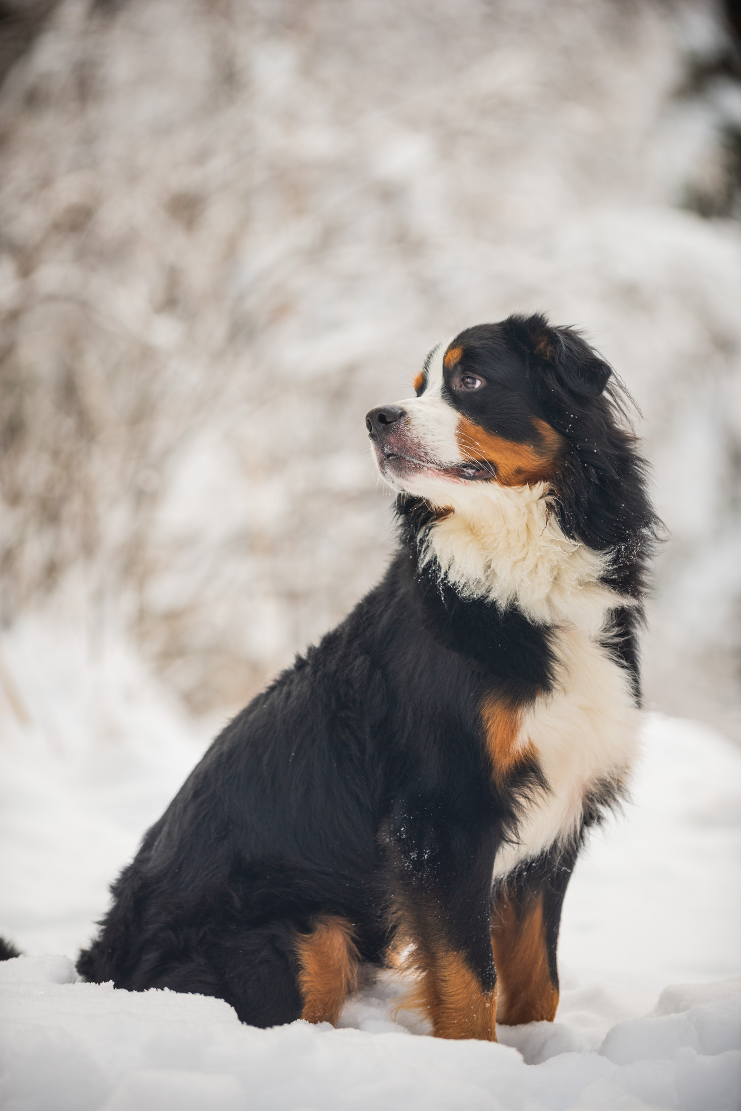 Meredith Berg Photography Anchorage Alaska Dog Pet Photographer Yukon Gethan-330-Edit.jpg