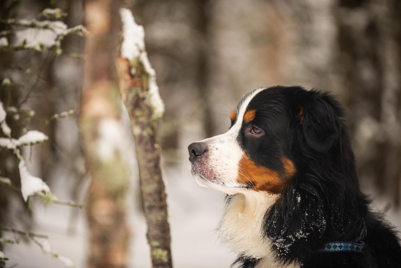Meredith Berg Photography Anchorage Alaska Dog Pet Photographer Yukon Gethan-476-Edit.jpg