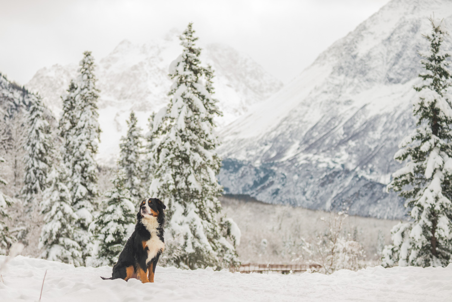 Meredith Berg Photography Anchorage Alaska Dog Pet Photographer Yukon Gethan-334-Edit.jpg