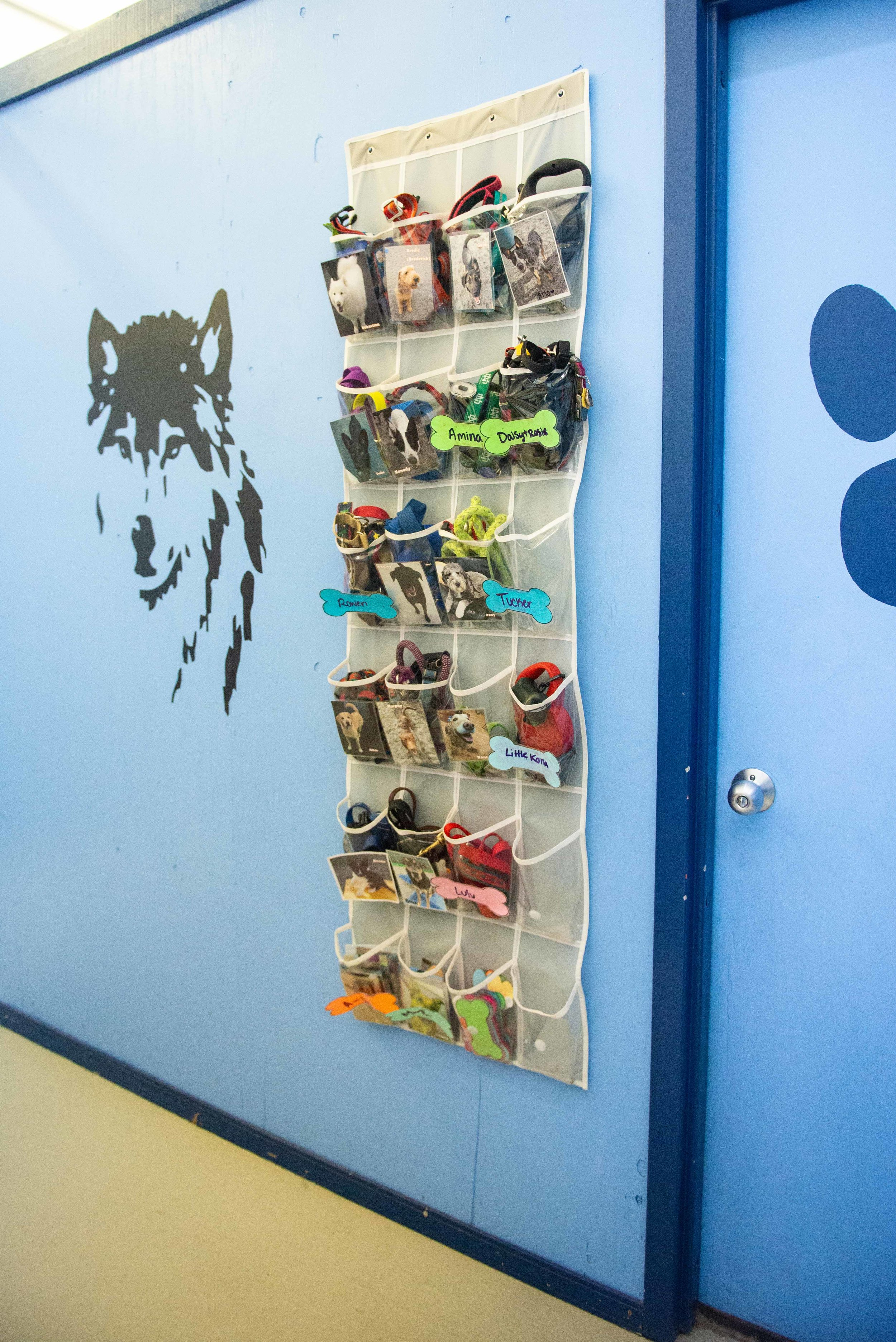 Organization for all pups and their collars and leashes!
