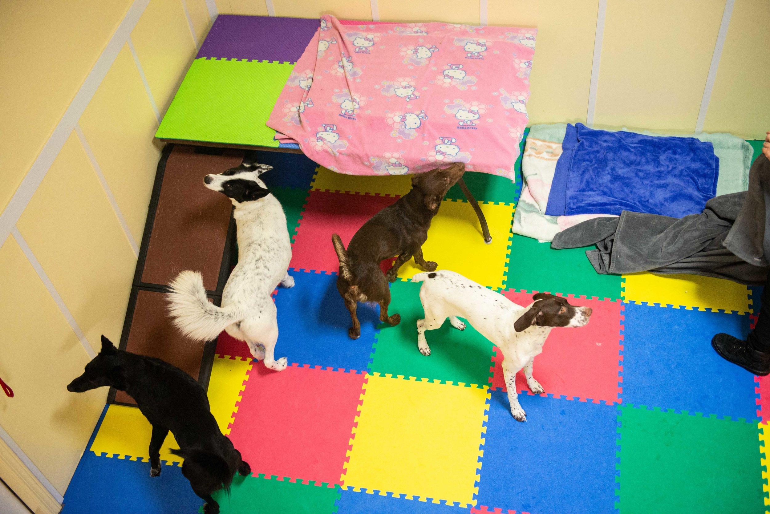 Luxury Daycare Area