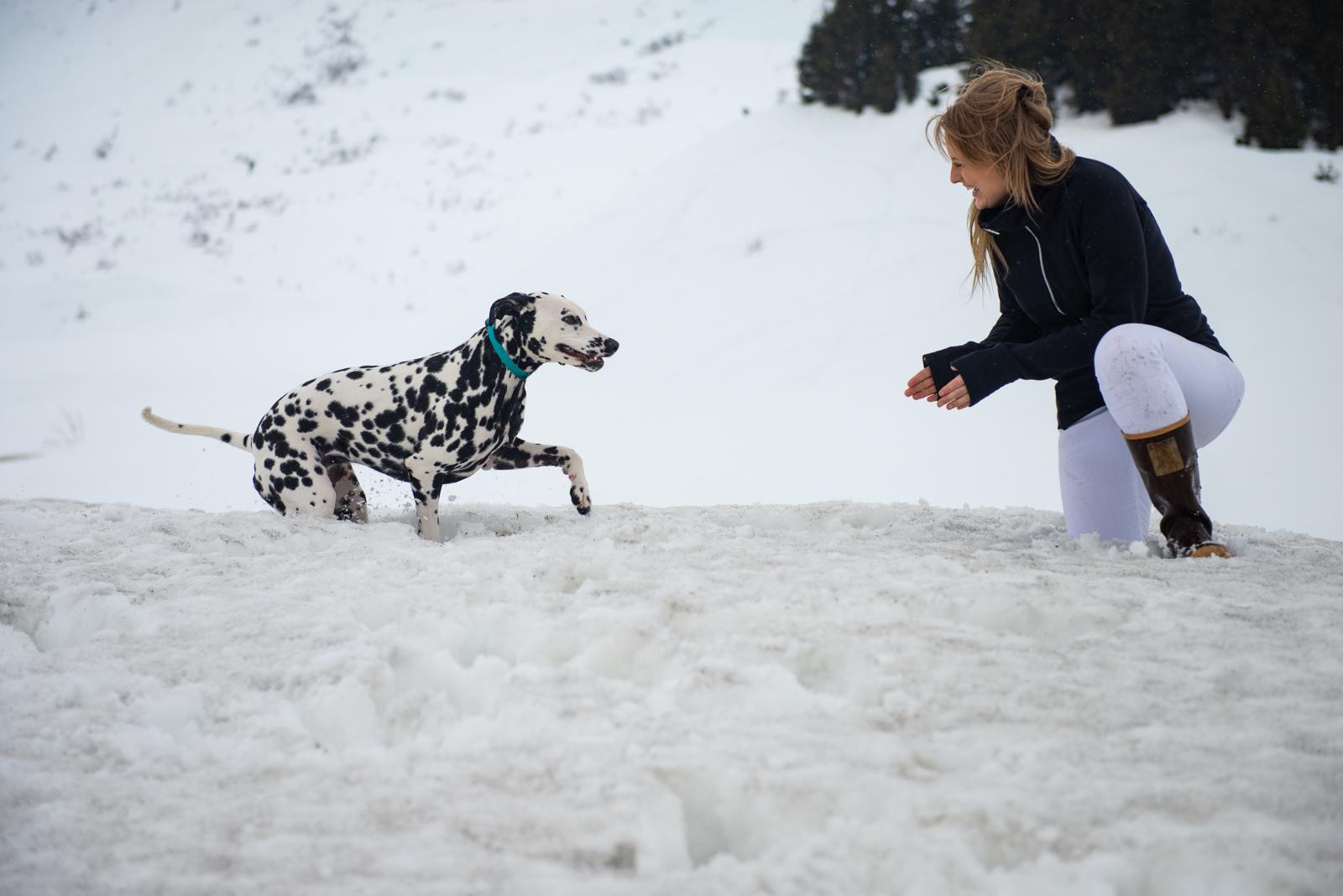 Meredith Berg Photography Anchorage Alaska Dog Pet Photographer ChristinaandTangles062-Edit.jpg