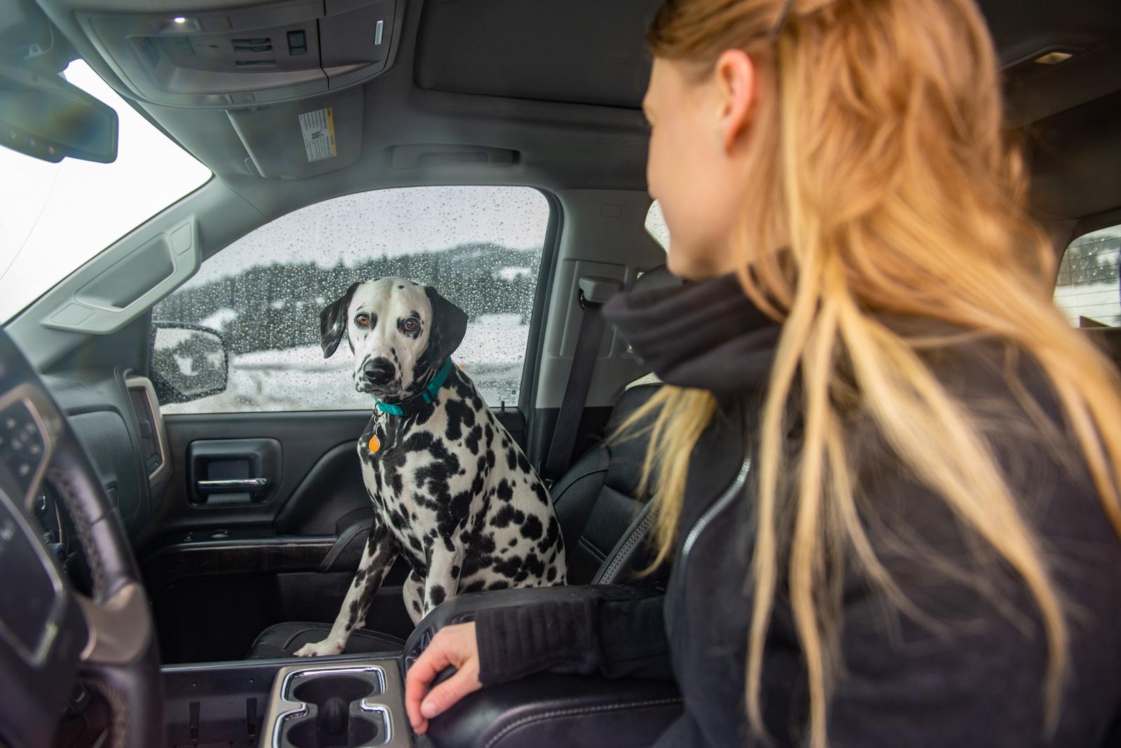 Meredith Berg Photography Anchorage Alaska Dog Pet Photographer ChristinaandTangles215.jpg