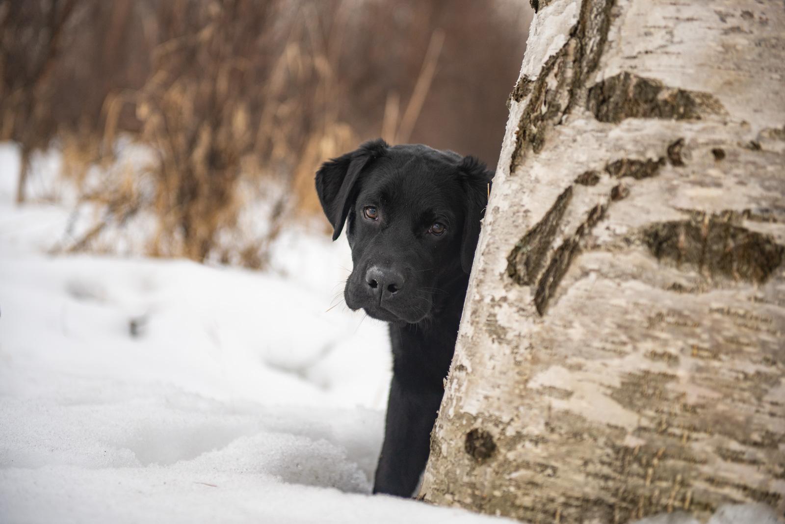 Meredith Berg Photography Anchorage Alaska Dog Pet Photographer Shadow-275-Edit.jpg
