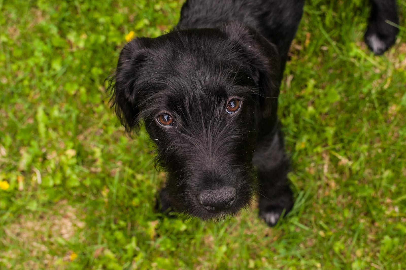 Meredith Berg Photography Anchorage Alaska Dog Pet Photographer Zoe-77.jpg