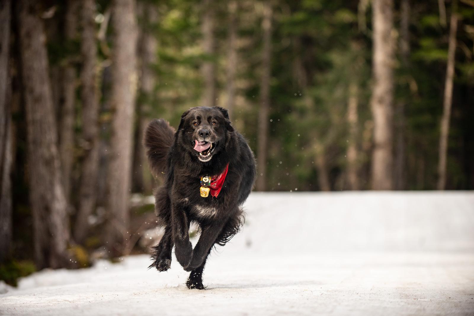 Meredith Berg Photography Anchorage Alaska Dog Pet Photographer _DSC6001.jpg