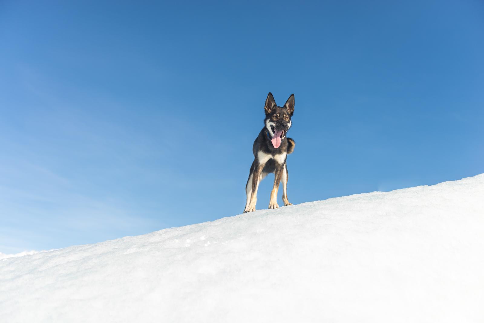 Meredith Berg Photography Anchorage Alaska Dog Pet Photographer Hazelnut Husky Mix Knik Glacier_DSC5435.jpg