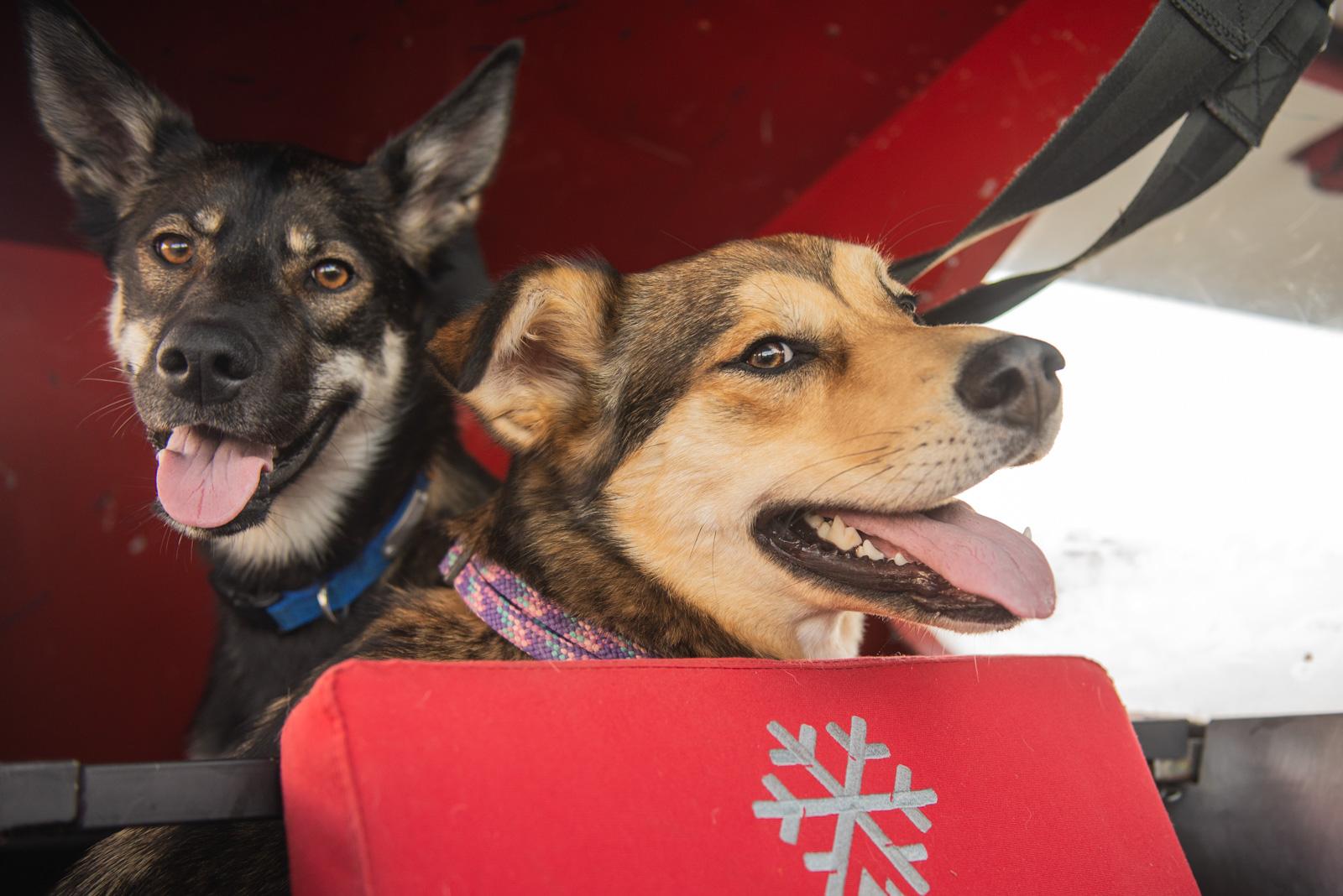 Meredith Berg Photography Anchorage Alaska Dog Pet Photographer Hazelnut Husky Mix Knik Glacier_DSC5535.jpg