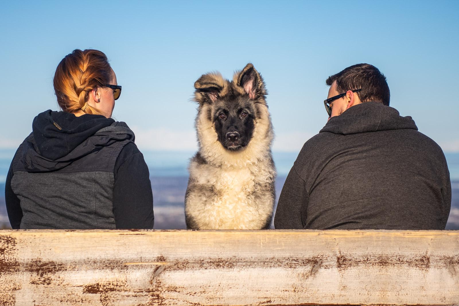 Meredith Berg Photography Anchorage Alaska Dog Pet Photographer Bear German Shepherd Mix_DSC5670-Edit-Edit.jpg