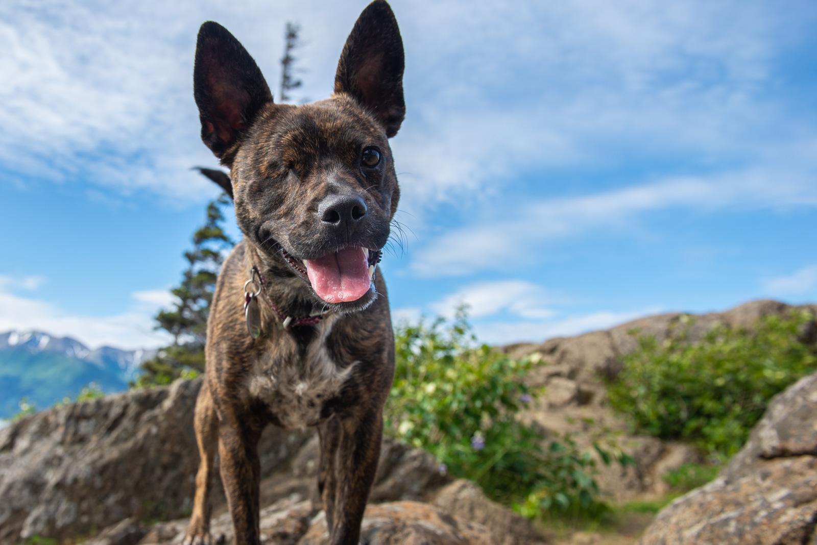 Meredith Berg Photography Anchorage Alaska Dog Pet Photographer _DSC8097-2-Edit.jpg