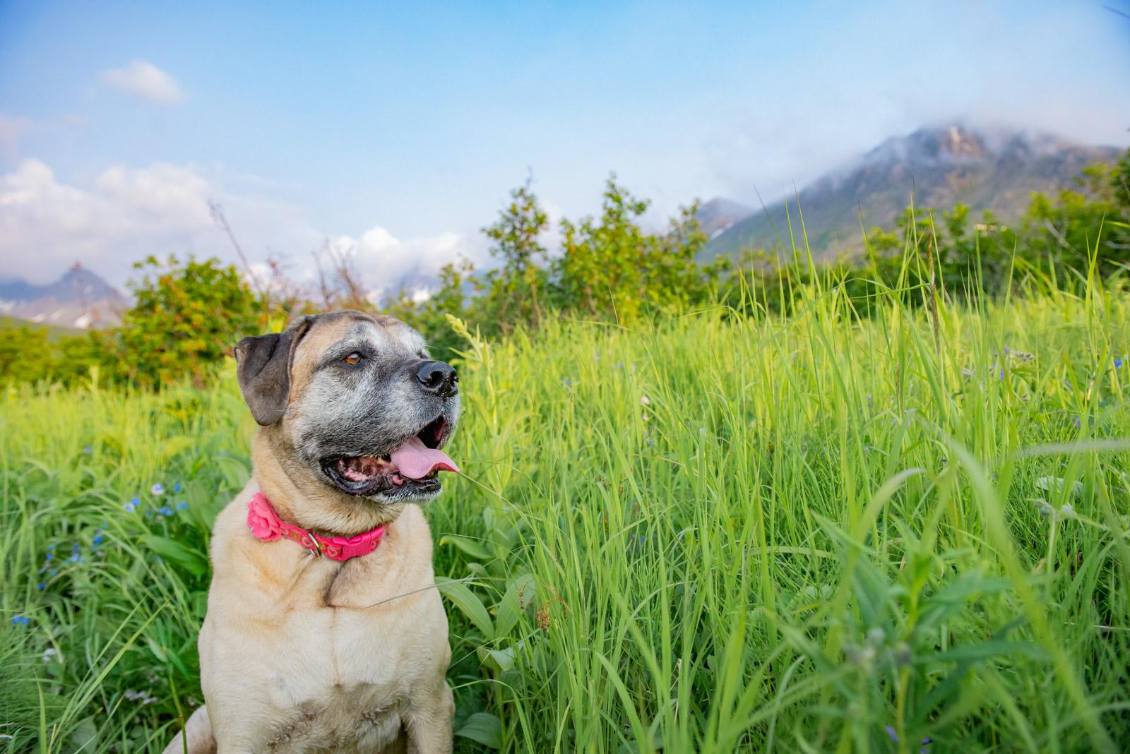 Meredith Berg Photography Anchorage Alaska Dog Pet Photographer _MBP8416-2.jpg