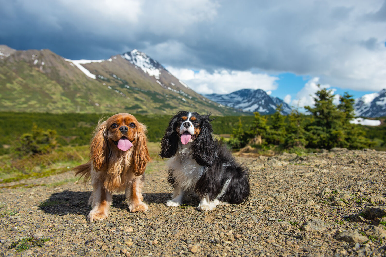 Meredith Berg Photography Anchorage Alaska Dog Pet Photographer Ali and Harmony Cavalier King Charles Spaniel_DSC6497.jpg