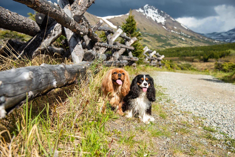 Meredith Berg Photography Anchorage Alaska Dog Pet Photographer Ali and Harmony Cavalier King Charles Spaniel_DSC6626-Edit.jpg