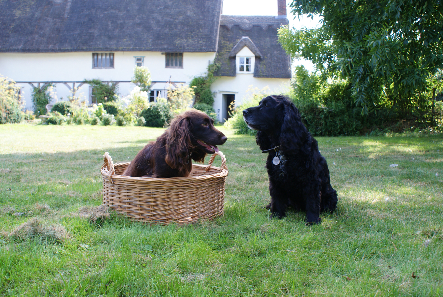 'Panier Circulaire'  Round Wicker Basket found in France, modelled by Fig & Hattie at Rosehip HQ.