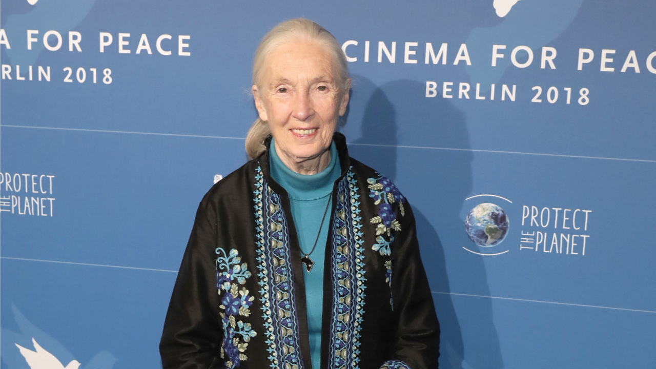 Dr. Jane Goodall at the Cinema for Peace Gala 2018 in Berlin.