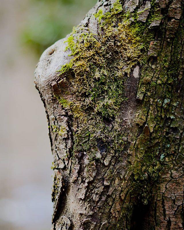 Green in the midst of winter 📷 Max van Rijn @maxvanryn #digitalsarntal . . . . . . . . . . #sarntal #photographers #filmmakers #outdoor #visualartists #lifeinsouthtyrol #visitsouthtyrol #inspiration #green #tree