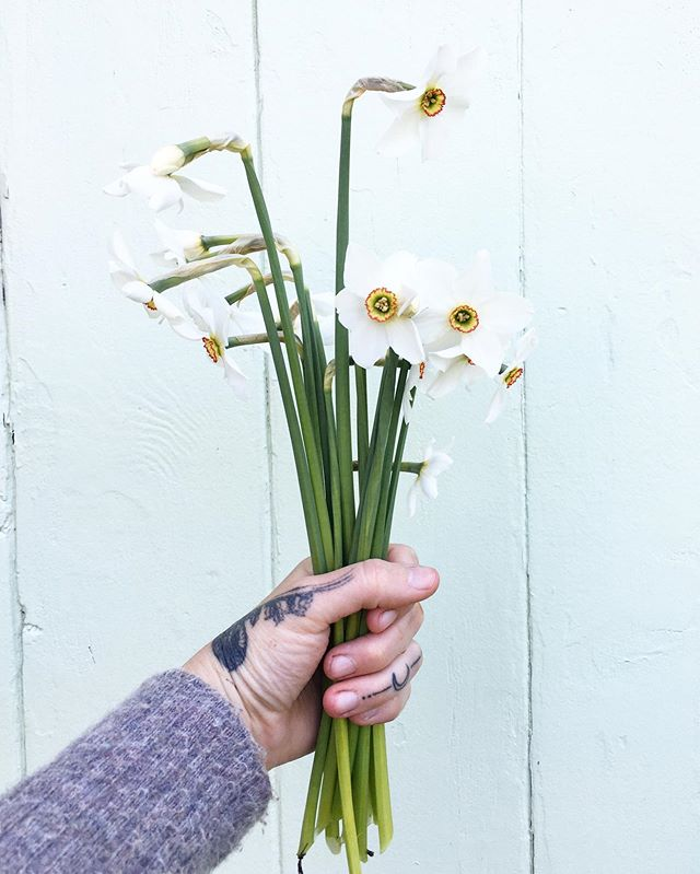 This Pheasant Eye daffodil smells amazing. It's currently paired with Lily of The Valley in the farm stand.