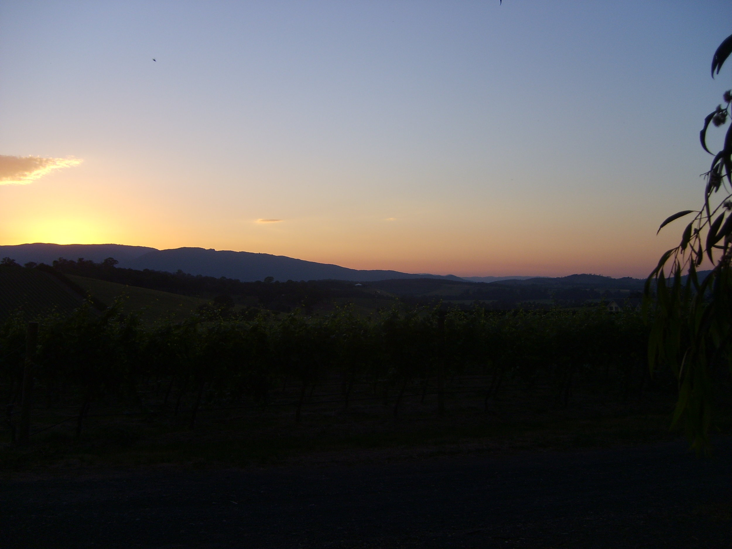 Dawn above the vineyards of Yarra Valley, Victoria.