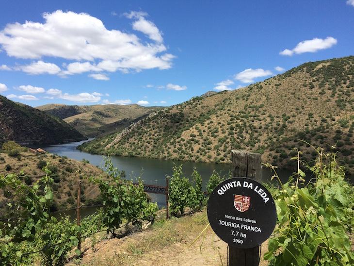 Touriga Franca grapes destined for the stunning Quinta da Leda red