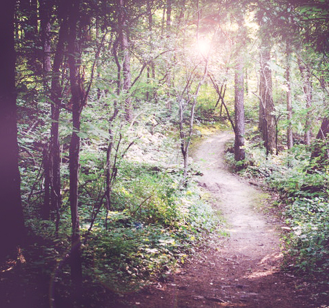 path-spiritual-mentoring-outdoor-forest.jpg