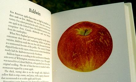 apples baldwin spread.jpg