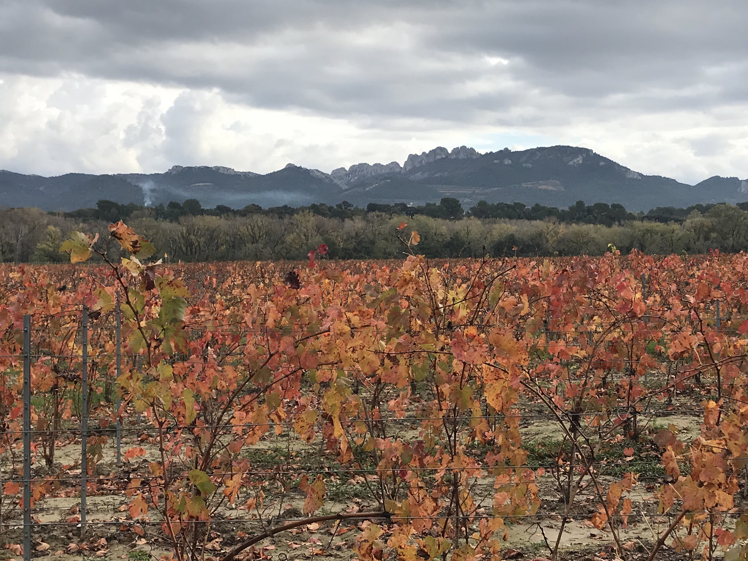 Flat plain in Southern Rhône