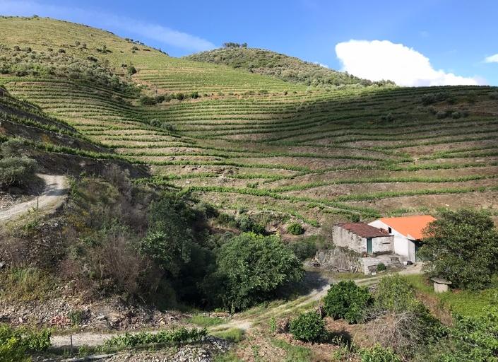 Portuguese wine douro travel valley.jpg