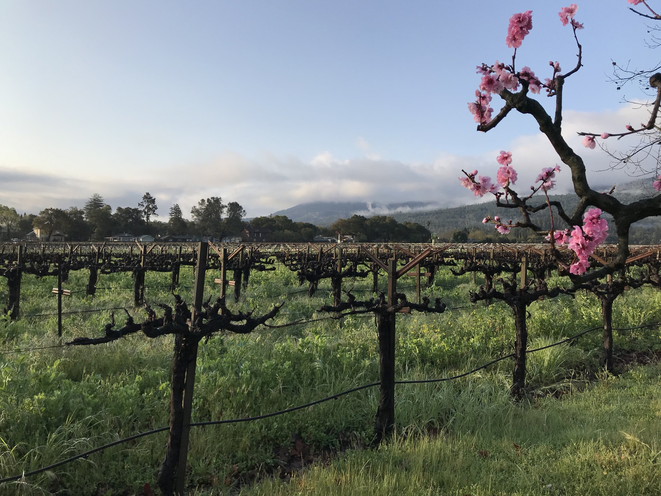 St Helena Napa wine country.jpg