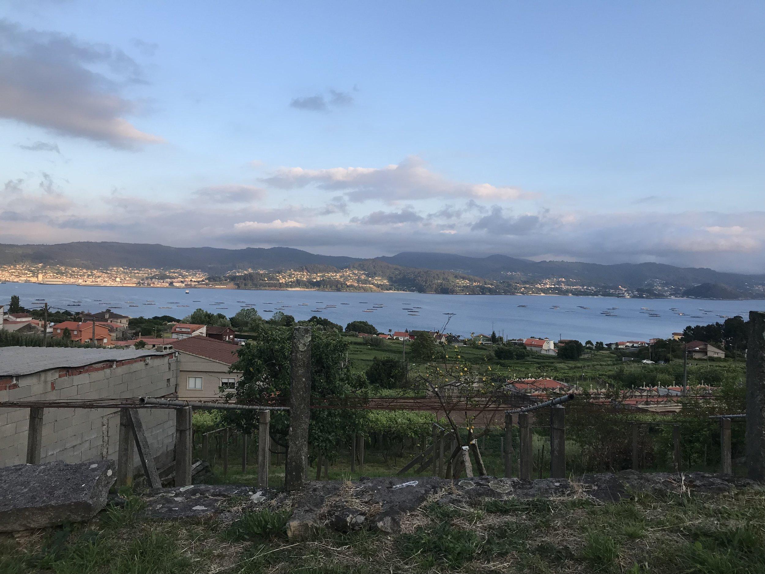 Albarino Alvarinho grapes in Rias Baixas Spain.jpg