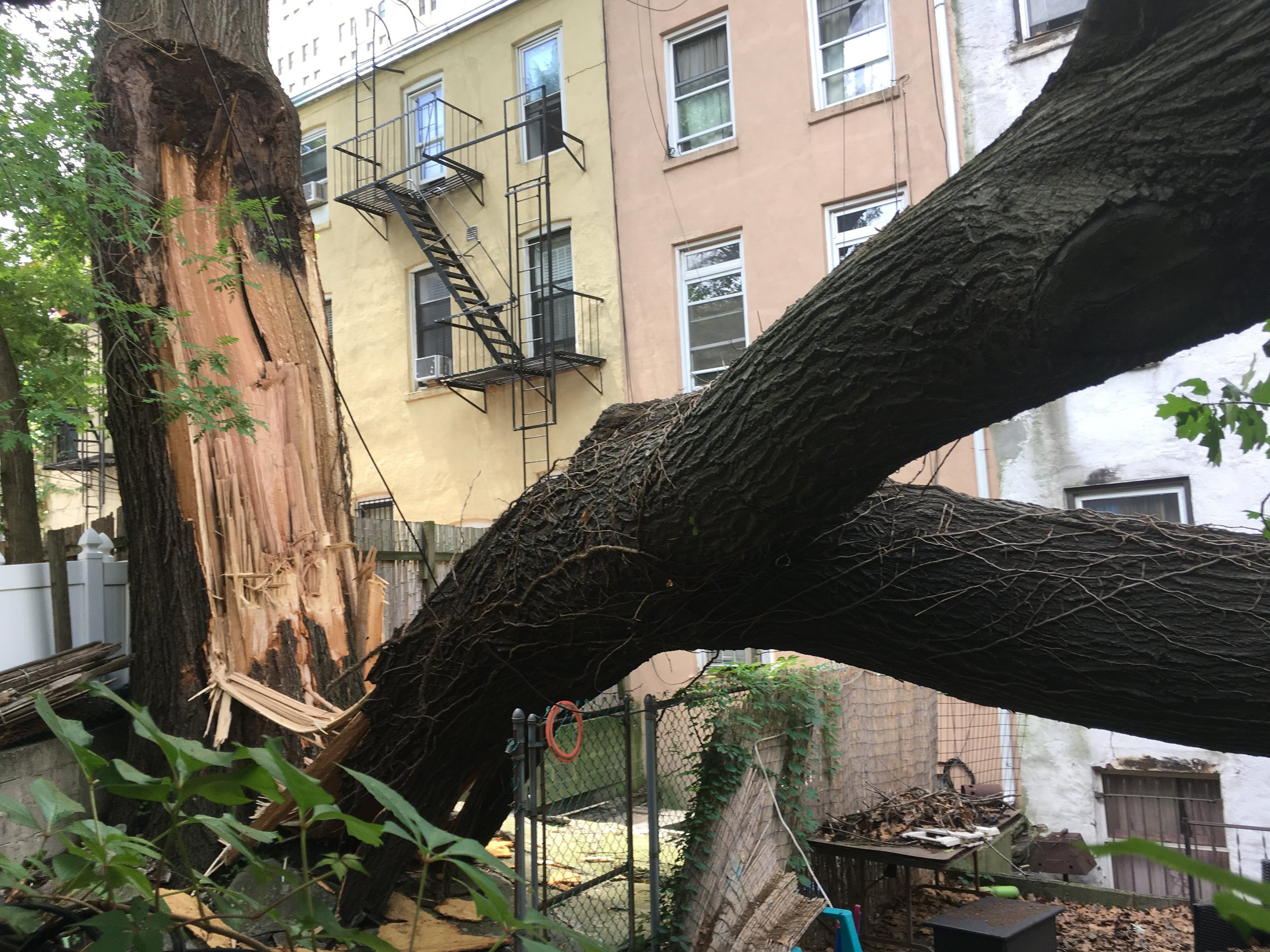 An adventure of an appraisal after a rainstorm, an oak tree with included bark, a weak fork. We didn't end up taking this job. We have big personalities here at Arborpolitan, but we're a small company