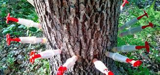 oak wilt treatment.jpg